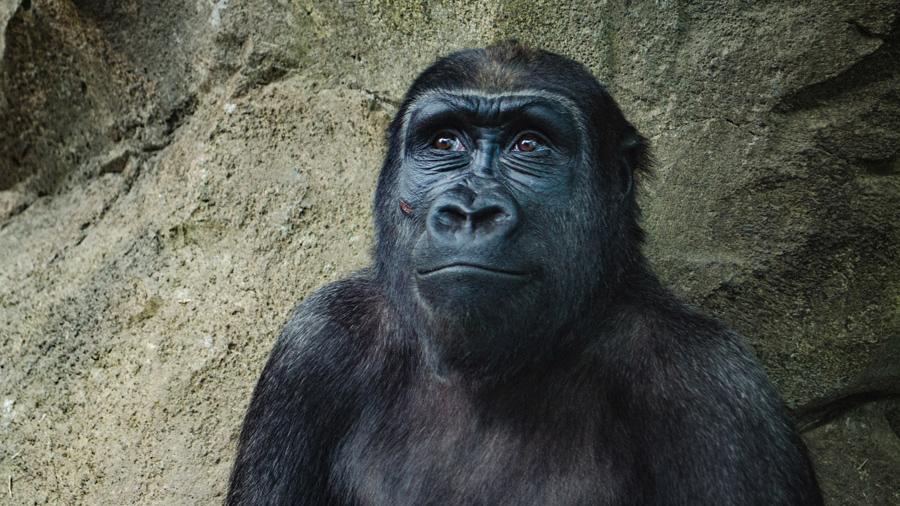 人類は猿から進化していなかった